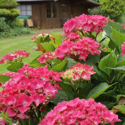 Die Gartengestaltung